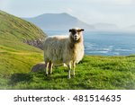 Wildlife In The Faroe Islands