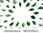 green leaves frame on white... | Shutterstock . vector #481523611