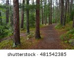 path through the woods on a... | Shutterstock . vector #481542385