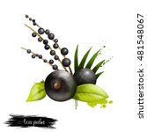acai palm with leaves isolated. ... | Shutterstock . vector #481548067