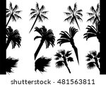the image of palm trees and... | Shutterstock .eps vector #481563811