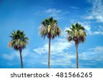 three tall palm trees in a row... | Shutterstock . vector #481566265