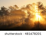 sunrise on a foggy morning at... | Shutterstock . vector #481678201