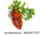 boiled crayfish on isolate... | Shutterstock . vector #481697737