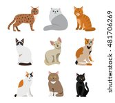cat breeds cute pet animal set... | Shutterstock .eps vector #481706269