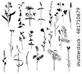 vector set of wild flowers and... | Shutterstock .eps vector #481710679