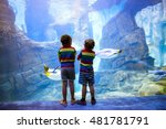 two little kid boys observing...   Shutterstock . vector #481781791
