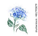 Watercolor Hortensia Flower. ...