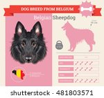belgian sheepdog dog breed... | Shutterstock .eps vector #481803571