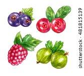 watercolor berries gooseberries ... | Shutterstock . vector #481815139