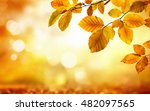 Autumn Beech Leaves Decorate A...