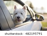 a west highland white terrier a ... | Shutterstock . vector #482195791
