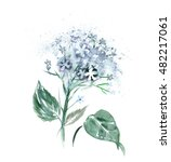 Watercolor Hortensia Flower ...