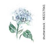watercolor hortensia flower ...   Shutterstock . vector #482217061
