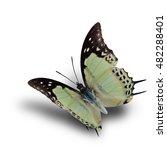 Shan Nawab Butterfly  Polyura...