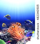underwater scene with anemone... | Shutterstock . vector #482340505