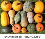 Autumn Harvest Colorful...