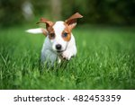 Stock photo happy puppy running outdoors 482453359