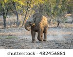 young elephant playing in the...   Shutterstock . vector #482456881