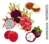 rambutan. mangosteen. lichee.... | Shutterstock .eps vector #482588251