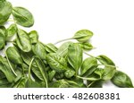 fresh spinach bundle isolated... | Shutterstock . vector #482608381