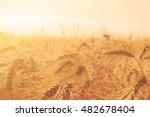 wheat field with ripe ears... | Shutterstock . vector #482678404