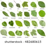 collage from green leaves of... | Shutterstock . vector #482680615