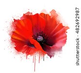 Red Poppy Closeup  Isolated On...