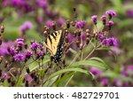 yellow swallowtail | Shutterstock . vector #482729701