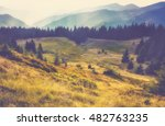 autumn mountain landscape at... | Shutterstock . vector #482763235