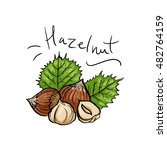 a handful of hazelnuts and... | Shutterstock .eps vector #482764159