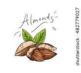 illustration almonds for... | Shutterstock .eps vector #482779027