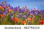 Wildflowers Blooming In Texas...