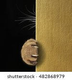 Small photo of A cat's paw with long and sharp claws and whiskers on a book cover.