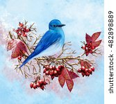 Blue Bird Sitting On A Branch ...
