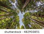 hiking through the coastal...   Shutterstock . vector #482903851