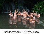 Pink Flamingos In Singapore