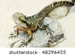 a close up of a beautiful...   Shutterstock . vector #48296455