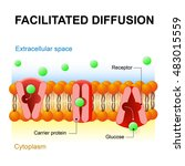facilitated diffusion or... | Shutterstock .eps vector #483015559