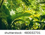 jungle with tropical plants and ... | Shutterstock . vector #483032731