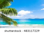 palms overhanging under trees  | Shutterstock . vector #483117229