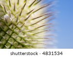 macro of a green flower with... | Shutterstock . vector #4831534