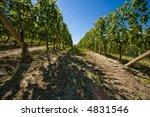 vineyard in langhe roero  italy ... | Shutterstock . vector #4831546