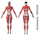 female musculature | Shutterstock . vector #4833100