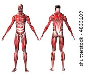 male musculature | Shutterstock . vector #4833109