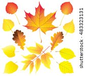 set of different leaves in... | Shutterstock .eps vector #483323131