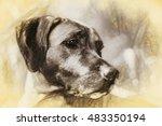 Rhodesian Ridgeback Hunting Dog ...