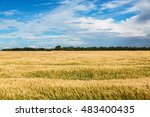 Wheat Field In North Dakota On...