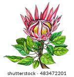 pink protea king exotic flower... | Shutterstock . vector #483472201