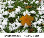 Maple Leaf On Green Grass Whic...